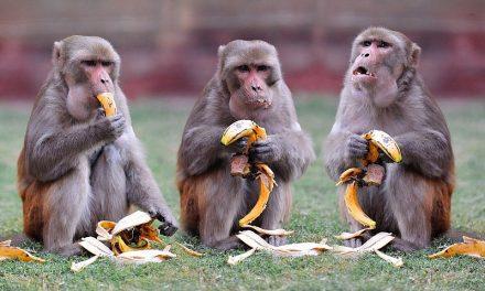 Как Новичок стана салата, а половината българи – маймуни